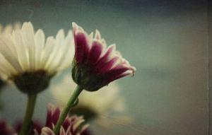 unspokenwords_flowers