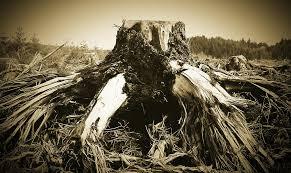 deathofatree