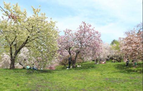 cherryfields
