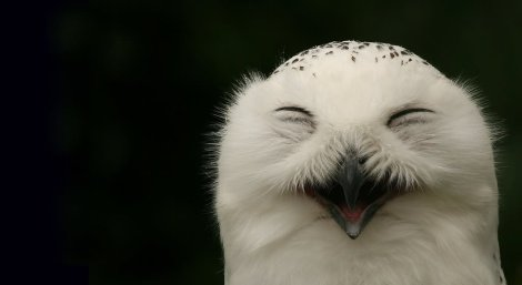 smiling-face-funny-bird-picture