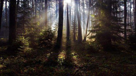 woods-1200x675