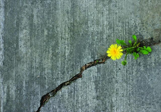 in_0414_sidewalkflower